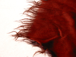 Obverse Detail 8